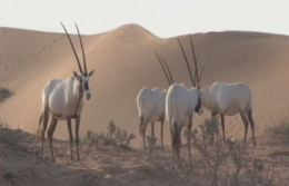 Desert conservation efforts go hand-in-hand with tourism